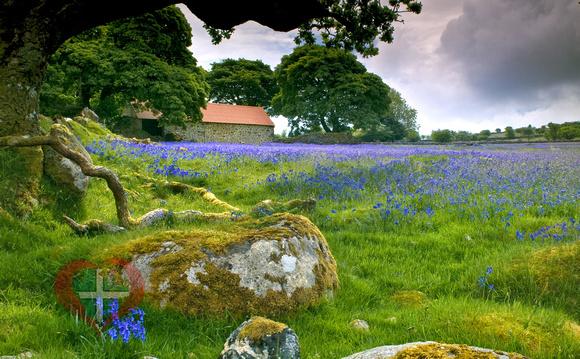 Lloyd Wa Cosway Photography Based In Totnes South Devon